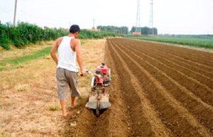 Фото: Посадка картофеля с помощью мотоблока
